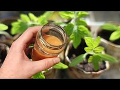 Diet And Nutrition, Moscow Mule Mugs, Vegetables, Plants, Youtube, Farmhouse, Lawn And Garden, Vegetable Recipes, Plant