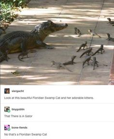 swamp cat and her kittens?