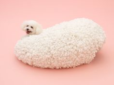 'Architecture for Dogs'. It's hard to tell dog from design in Kazuyo Sejima's Architecture for the Bichon Frise.