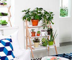 plantas-na-decoração-dos-ambientes