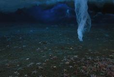 Brinicles are underwater icicles. When sea ice melts, it leaves behind brine that is so salty it sinks. A brinicle forms when sea water freezes around the descending salt. As the underwater icicle moves toward the sea floor, it kills nearly everything in its path by encasing it in ice. A film crew for the BBC was the first to capture this phenomenon on camera.