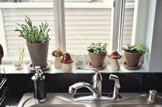 window sill succulents