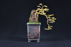 Gold cascade root over rock Bonsai handmade from wire