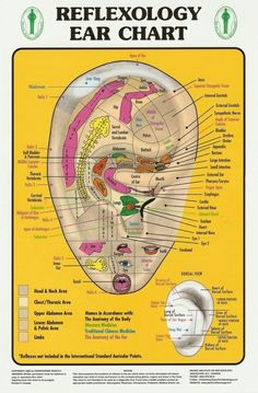 How to Apply Reflexology to the Ears. Ear reflexology is not as well-known as foot or hand reflexology, but can relieve stress and pain. Application of ear reflexology is fast and easy. You massage pressure points on the ear to treat aches. Massage Pressure Points, Pressure Points Chart, Reflexology Massage, Ear Massage, Reflexology Points, Acupuncture Points, Massage Body, Foot Massage, Alternative Health