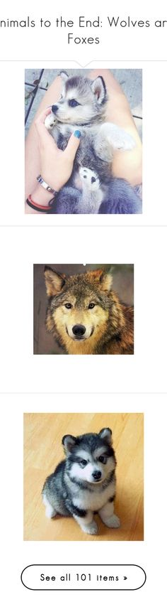"""Animals to the End: Wolves and Foxes"" by hallaveryh ❤ liked on Polyvore featuring animals, pictures, pets, backgrounds, dogs, wolf, fillers, effect, instagram and people"