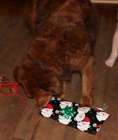 Random Animals: A Doggie Howliday