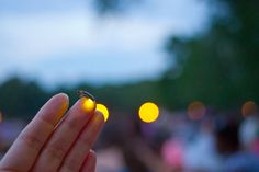 catching fireflies #splendidsummer