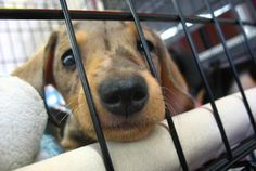 All You Need to Know About Volunteering at Your Local Animal Shelter