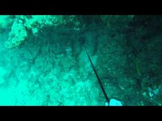 DRIFT DIVE BOCA 14/02/15 - Highlights - http://www.florida-scubadiving.com/florida-scuba-diving/drift-dive-boca-140215-highlights/