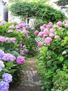 Everyone Loves A Hydrangea Path. Proven Winners U0027Letu0027s Danceu0027 Series Will  Have You