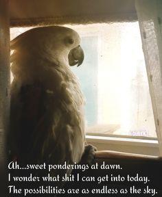 Ziggy ponders life Bird Mom, Parrot, Sky, Comics, Life, Animals, Parrot Bird, Heaven, Animales