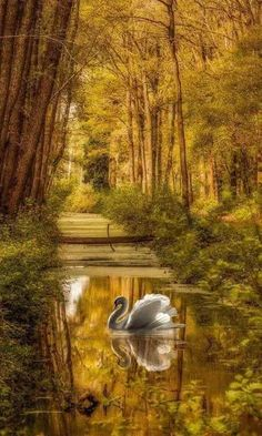 Reflection: Nature's Photography