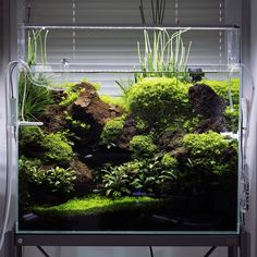 2,506 vind-ik-leuks, 22 reacties - Green Aqua (@greenaquashop) op Instagram: 'ADA Cube Garden 60H set. With black lava, Hemianthus Glomeratus, Riccardia, a bunch of…'