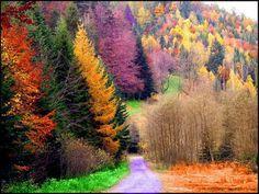 fall colors=amazing<3
