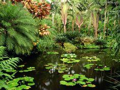 trilhadomato: Jardim Tropical