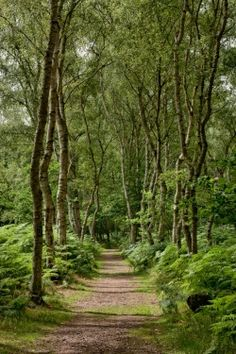 Sherwood Forest in England. My grandma would tell me stories of this place. :)