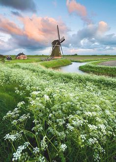 Holland- would love to cycle here