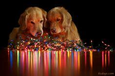 lake dog photo - Google 検索