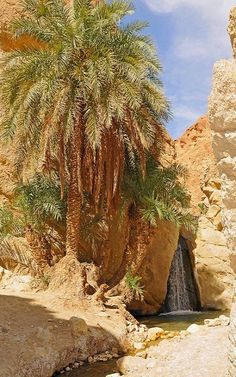 Chebika is a mountain oasis in western Tunisia, in Tozeur Governorate. Chebika lies at the foot of the mountains of the Djebel el Negueb and, because of its exposure to the sun, it is known as Qasr el-Shams. We Are The World, Wonders Of The World, Places Around The World, Around The Worlds, Beautiful World, Beautiful Places, Reserva Natural, Desert Oasis, North Africa