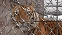Kenny Hetrick is challenging the Ohio Department of Agriculture's decision denying him a permit to keep the animals at his home just outside Toledo.