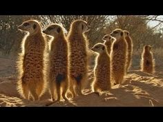 Africa Episode 1 Kalahari with David Attenborough - Documentary - YouTube