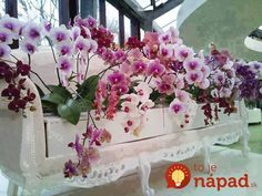 Beautiful floral arrangement and bench Exotic Flowers, Amazing Flowers, Orchid Planters, Lily Garden, Orchidaceae, Types Of Flowers, Diy Flowers, Blue Flowers, Ikebana