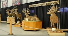 This Massive Whitetail Mount Collection is Exactly What You Need Today