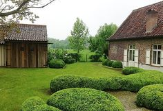 cloudy buxus - so very cool!