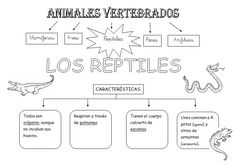 Science For Kids, Life Science, Science And Nature, Animal Projects, Projects For Kids, Les Reptiles, School Items, Premium Wordpress Themes, School Supplies
