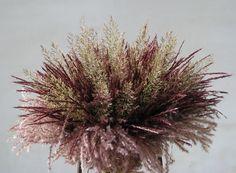 Bisselingskaat • with Miscanthus Subrosa and Calamagrostis brachytricha