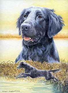 203 Best Flat Coated Retriever images in 2018 | Flat coated