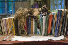 The World's Most Famous Library Cat, Dewey Readmore Books, along with post on history of cats in libraries