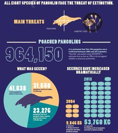 #Pangolin: The world's most illegally traded mammal.