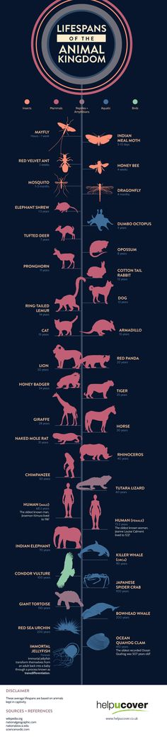 Lifespans of the Animal Kingdom #infographic #Animal  #RePin by AT Social Media Marketing - Pinterest Marketing Specialists ATSocialMedia.co.uk
