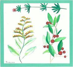 violabluff / rastlinky