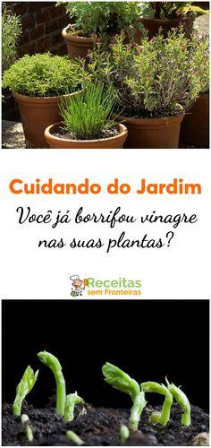 Eco Garden, Garden Tools, Home And Garden, Begonia, Colors For Dark Skin, Aloe Vera, Flora, Succulents, Green