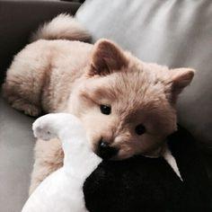 Fluffy! Pinterest: pearlxoxoxo