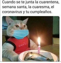 Funny Spanish Memes, Spanish Humor, Crazy Funny Memes, Wtf Funny, Funny Cats, Frases Humor, Happy Birthday, Jokes, Lol