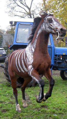 Horse Of The Apocalypse
