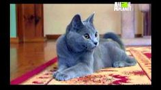 La Guia Maxima de LOS GATOS Discovery Channel) Documental - YouTube