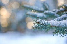 Winter Silence by kimberleigh via http://ift.tt/2kjjJtk