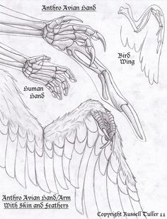 "Here is the hand study I did before creating my latest piece ""Anthro Blue Heron"". This was new ground for me so I wasn't totally sure how to create a working hand for an anthro bird so I created th. Creature Drawings, Animal Drawings, Art Drawings, Creature Concept Art, Creature Design, Fantasy Creatures, Mythical Creatures, Wings Drawing, Drawing Expressions"