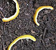 9 jardiniers sur 10 ne connaissent pas ces astuces