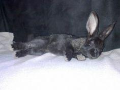 votez pour ce lapin sur http://www.zoomalia.com/photomalia/jeu/42 #jeux #concours #zoomalia #photomalia #animalerieEnLigne #animalerie #accessoires #animaux #aquariophilie