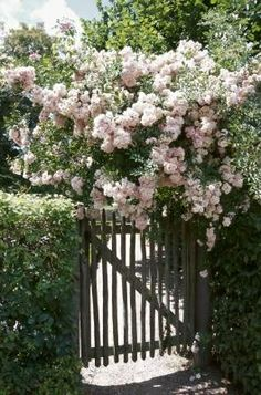 fleurs flowing over gate & hedges... perfect!