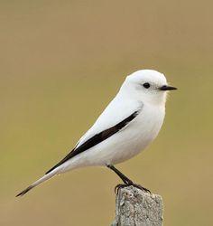 Cute Birds, Pretty Birds, Beautiful Birds, Loro Animal, Owl Pet, Cute Animals, Animals And Pets, Kinds Of Birds, Mundo Animal