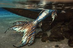 Image about aesthetic in aes; mermaid by Irene H2o Mermaid Tails, Realistic Mermaid Tails, Mermaid Swim Tail, Silicone Mermaid Tails, Mermaid Man, Siren Mermaid, Mermaid Swimming, Fantasy Creatures, Mythical Creatures