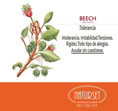 Beech: Tolerancia Reiki Quotes, Bach Flowers, Flower Cards, Flower Power, Healing, Herbs, Nature, Zen, Yoga
