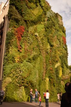 The garden wall in Madrid has numerous types of grasses, flowers and plants growing on it.