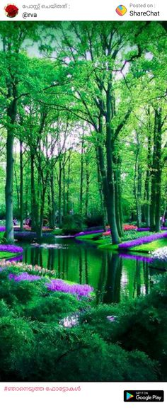Keukenhof Gardens in Keukenhof, Netherlands. Love this so muchhhh! Discover beautiful places on earth. Travel the world of your dreams. Beautiful World, Beautiful Gardens, Beautiful Places, Beautiful Scenery, Stunningly Beautiful, Places Around The World, Around The Worlds, Belle Photo, Amazing Nature